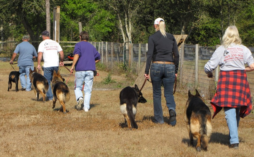 5 Reasons to Take Your Dog to Discipline Classes