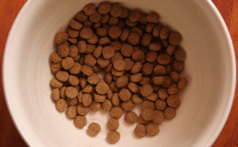 What To Look For in Dog Food